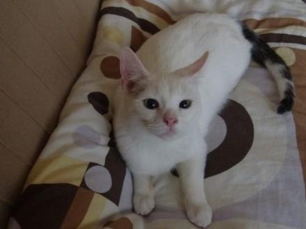 Gracja i Kredka  cudne kociaczki szukają domu!   Koty pospolite cała Polska