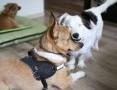 Młodziutki Baścik, radosny i grzeczny psiak do adopcji!