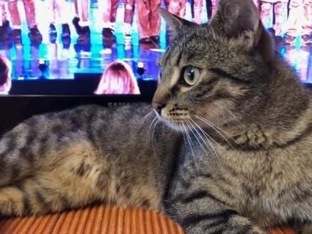 MACIEK młody kociak szuka kochającego i odpowiedzialnego domku
