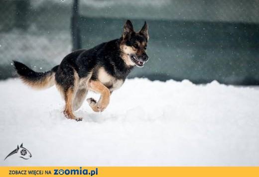 Leo - zarazi cię radością życia i uśmiechem:) ,  śląskie Gliwice