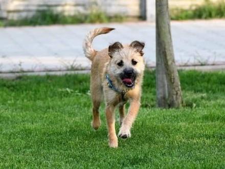 CHANELKA wesołe psie dziecię marzy o domku gdzie zazna szczęścia i miłości    Kundelki cała Polska