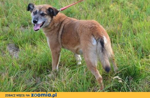 Madam-urocza, bardzo spokojna i zakochana w człowieku psinka,  śląskie Katowice