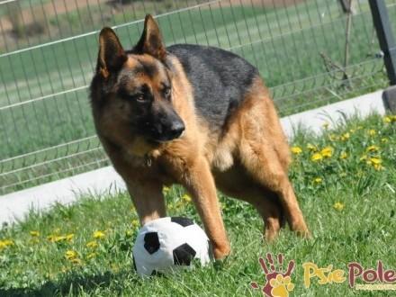 BARRY-fantastyczny pies z kiepską przeszłością-szukamy odpowiedzialnego opiekuna