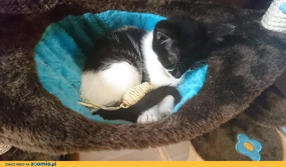 Koteczka Dama szuka domu