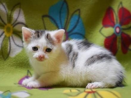 Kocie czworaczki