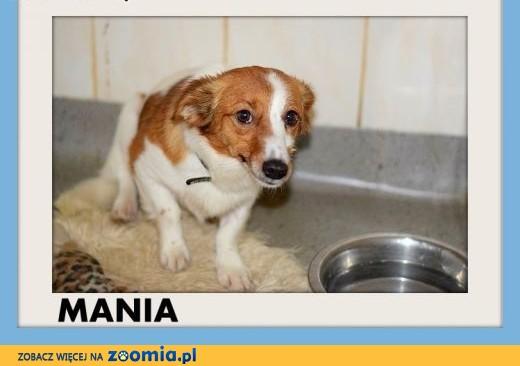 MANIA,mała 6kg,młoda,1 rok,łagodna,delikatna suczka.ADOPCJA,  dolnośląskie Wrocław