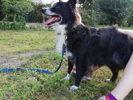 OBI - najmilszy pies na świecie  w nim spokój odnajdziecie :)