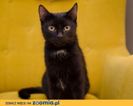 Milusia  czarna koteczka  spokojna i cierpliwa  szuka domu  Piotrków Trybunalski