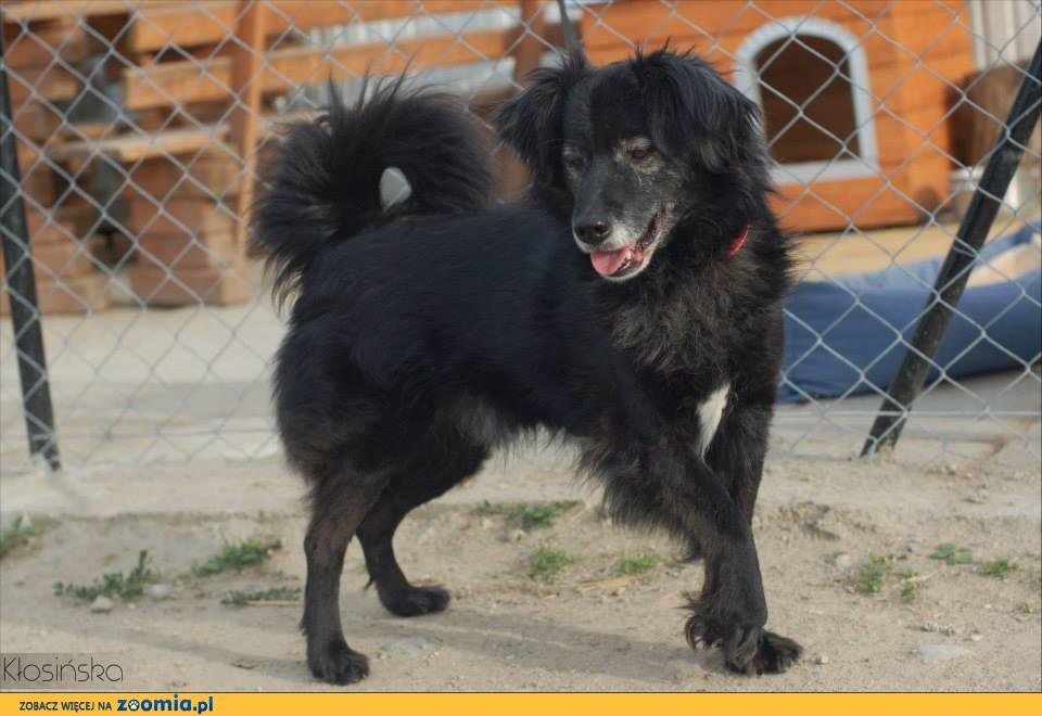 Dobruś, nieduży, niekłopotliwy psiaczek szuka kochającego domu!