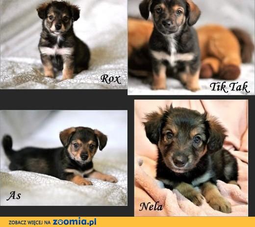 Wyrzucone w kartonie psie dzieciaki szukają domów!,  warmińsko-mazurskie Olsztyn