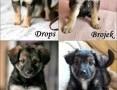 'Wyrzucone w kartonie psie dzieciaki szukają domów!,  warmińsko-mazurskie Olsztyn