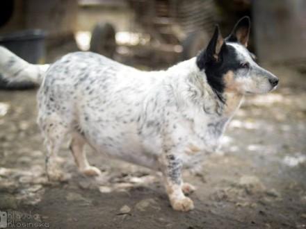 Wesoły Johny  nieduży  towarzyski psiaczek szuka domu!
