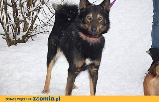 Aron młody przyjacielski psiak marzy o wspaniałym domu za zawsze,  Kundelki cała Polska