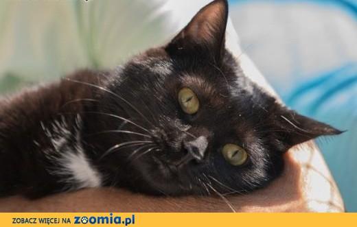 Kochające się koty proszą o wspólny kącik,  łódzkie Łódź