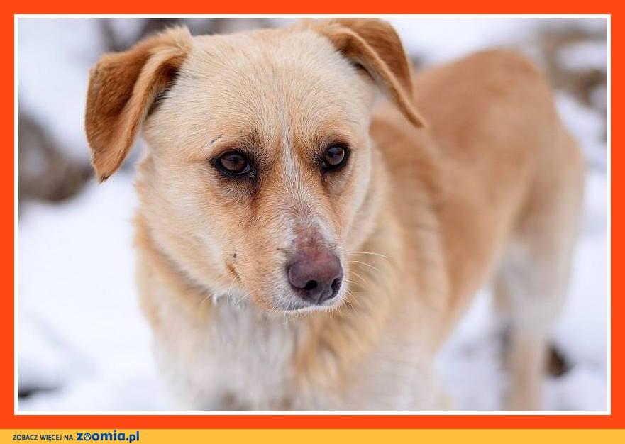 10 kg, sympatyczny,przyjacielski psiak na krótkich łapkach BARTUŚ_Adopcja