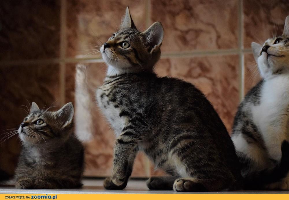 Kociaki: Piąty i Szósty szukają domów