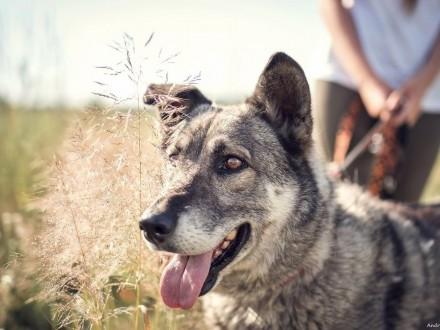 Walduś-uroczy  grzeczny i uczuciowy pies!