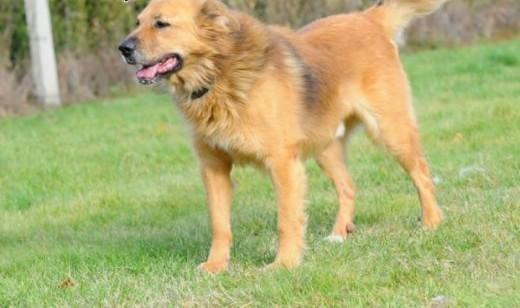 Teddy- radosny pies o uroku Misia Uszatka   lubelskie Lublin