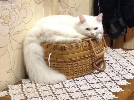 Kotki Syberyjskie