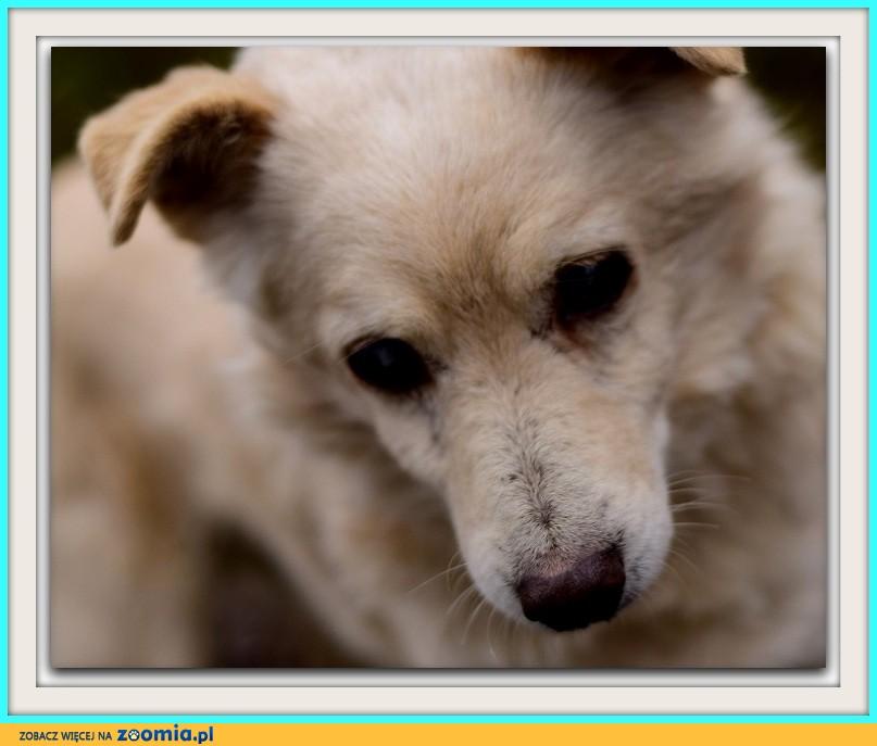 Mały 10 kg, spokojny, łagodny, grzeczny psiak BIELUCH_Adopcja
