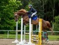 Sprzedam Konia sportowego !