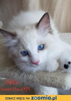 Urocza koteczka