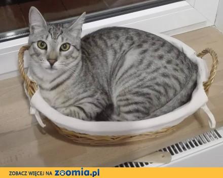 Zaginął kot Kajtek