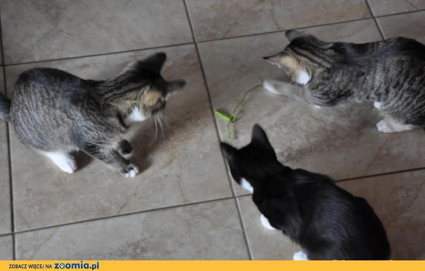 Jagódka, Guzik i Mitenka polecają się adopcji