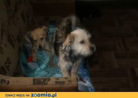 Sara i Martynka, dwie niewielkie sunieczki proszą o domek!