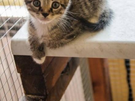 KOCIĘTA  słodkie maluszki  szukają super domów!   Koty pospolite cała Polska