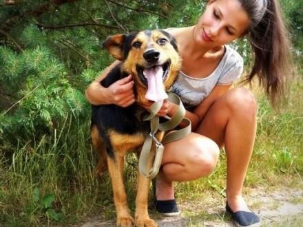 Moris- pies o wielkiej woli życia- DAJ MU DOM,  śląskie Katowice