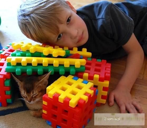 Kocięta Koty Abisyńskie Rodowodowe - GDYNIA