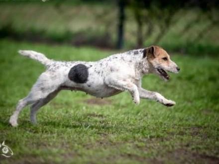 Zyzia ;#8211; wspaniała psia przyjaciółka    śląskie Gliwice