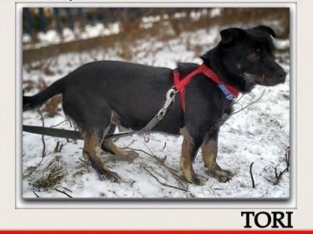 Mały 6 kg wesoły aktywny towarzyski kontaktowy zaszczepiony piesek TORIAdopcja   wielkopolskie Rzeszów