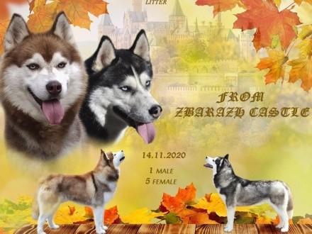 Husky FCI