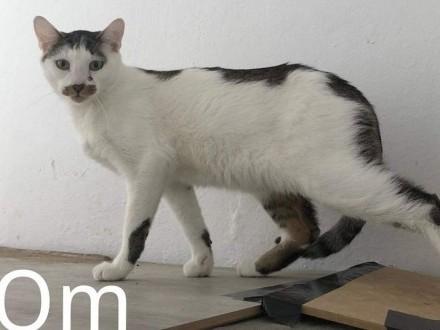 Wyjątkowy kotek czeka na kochających właścicieli