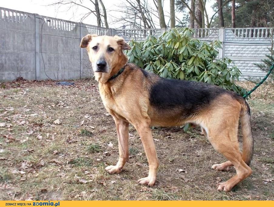 Mamej- łagodny psiak szukający domu!
