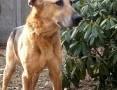 'Mamej- łagodny psiak szukający domu!