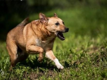 Biegnij MARIO  biegnij !!! Może uda się wytropić dom pełen miłości    świętokrzyskie Kielce