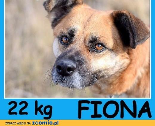 Średnia 22 kg,spokojna,łagodna ,przytulaśna suczka FIONA.Adopcja,  śląskie Katowice
