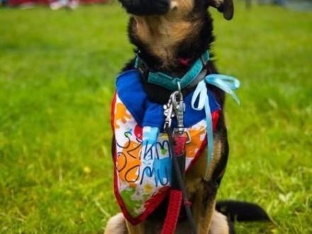 Gomez - idealny kandydat na psa rodzinnego  cudowny pies do adopcji!