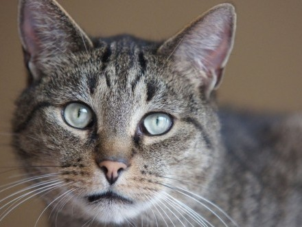 Cytrusik - Kotek nakolankowy