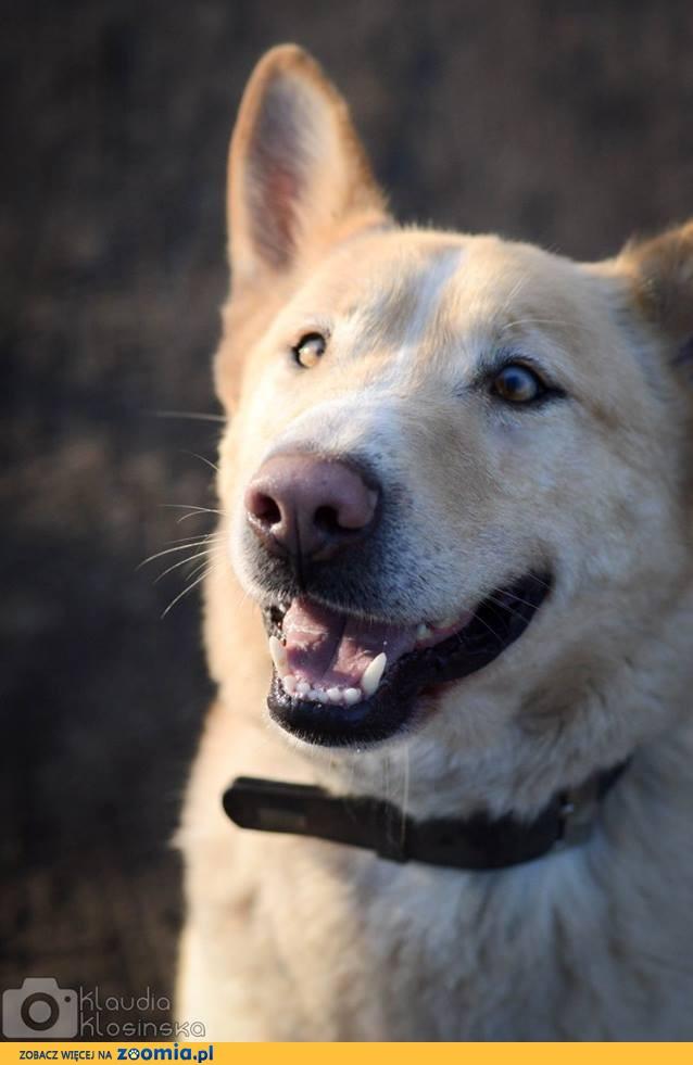 Marcel, przepiękny, przyjazny pies szuka kochającego domu!