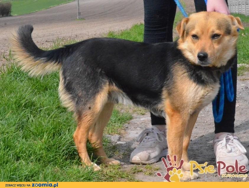 BAGGI - super kochaniutki porzucony psiak szuka domu, adopcja