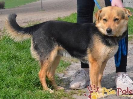 BAGGI - super kochaniutki porzucony psiak szuka domu  adopcja