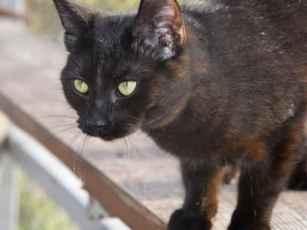 Młoda czarna kotka szuka domu