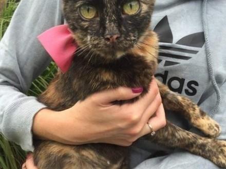 Słodka trzykolorka  koteczka szuka kochającego domu!
