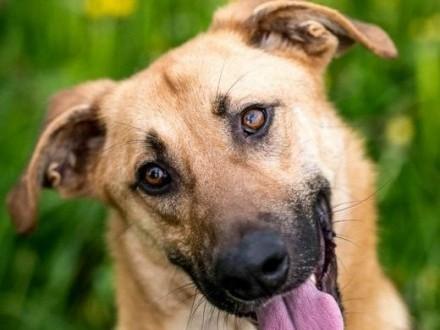 ORION - pies wesoły  może nawet iść do psiej szkoły;-)   lubelskie Lublin