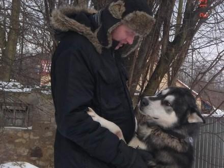 Oddam MALAMUTA w dobre ręce  pies ok6 lat duży i piękny Dragon