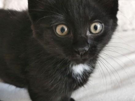 DAFI - uroczy 3 miesięczny kocurek szuka nowego domu!